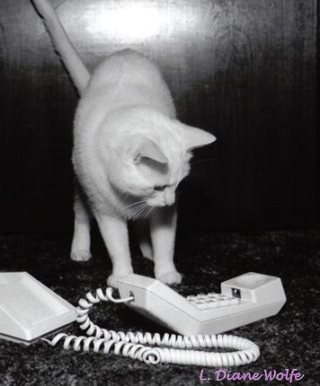 PHONE PUZZLEMENT