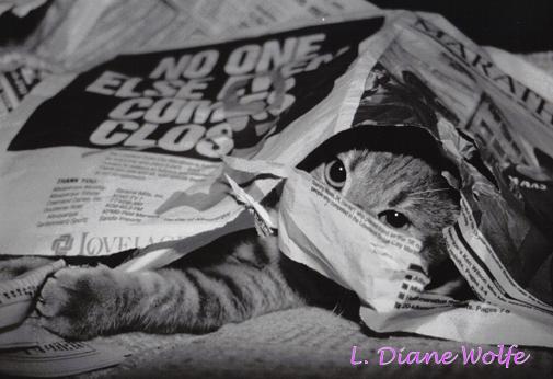 NEWSPAPER NUISANCE